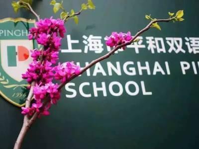 上海市青浦平和双语学校插班报名中